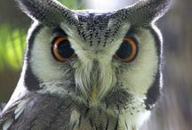 owls / by Missy Ross