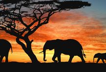 Blogartikel vom Afrikaspezialist.com