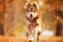 foto's hond