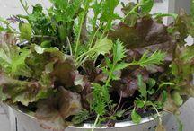 Creative Planter Ideas / by Kelly Rita Birtch