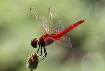 butterflies & bugs / by Sheila Eibes