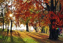 Alpharetta Ga Trees
