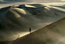 desert dwellers