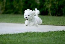 Creatures Comfort / Cute animal photos / by Vicki Shininger