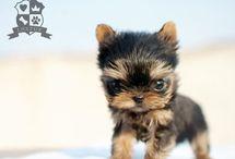 misc:  my puppy