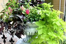 Gardening & Outdoor Living / by The Decorated House ~ Donna Courtney