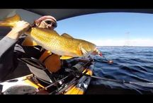 Gulf of Mexico Kayak Fishing / Fishing from a kayak in the Gulf of Mexico; how to's, locations, videos, information, product reviews and more.