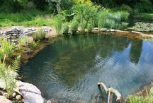 Duck ponds and pools