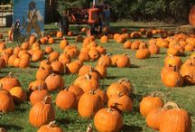 Fall Bucketlist / Things to do in the fall!  Visit a pumpkin patch, corn maze, and orchard!  Make s'mores, drink cider and pumpkin spice lattes, play in piles of leaves.  Go on a hayride!  All the things I want to do this fall!