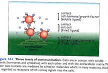 Immunology XIV: Adhesion Molecules and Leukocyte Recirculation / by Alfredo Corell
