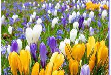 Spring / by Clara A