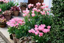 Ruukku puutarha