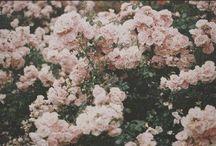flowers / by McKenzie Dietrich