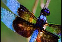 Dragonflies / by Jennifer Piel