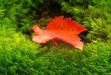 Garden Moss Landscapes