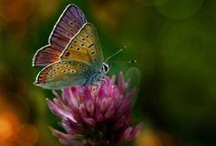 Lovely things : Butterflies & Dragonflies