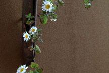 Liturgy  flower  arrangement