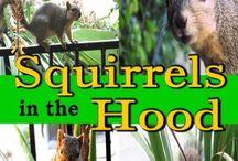 Squirrel-Friends / Anything squirrel-friendly! / by Lisa Maliga