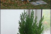 maison en bois pour mini jardin
