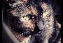 Lola Stuff / Lola is my cat.