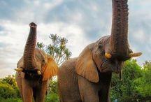 Sjöbo Gästgifvaregård elephants / Elefanter