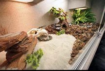 Bearded dragon cage ideas