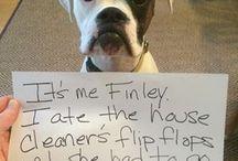 Dog Shame Funnies