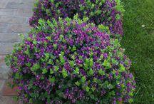 Çiçeklikler / Cafe, restaurant ve teras bahçeleri bitkilendirme