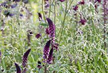 Plantcombi