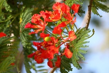 Bermuda's Lush Life / The island of Bermuda is filled with flora and fauna, adding colour and fragrance to the atmosphere.  / by Bermuda