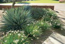 plantings for pool area / low litter plants for around our pool