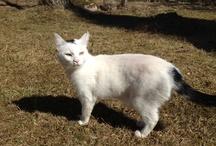 Gatitos/kitties / Mis gatas, Blanca y Fetish y algunos infiltrados