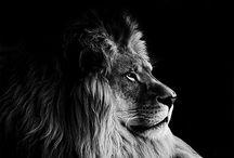 Black & White Wildlife