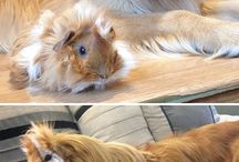 The friendship between a dogii & a hamster