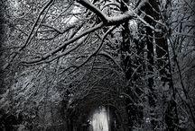 Photography Inspiration / by Megan Brincks
