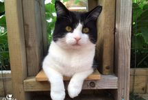 Catio / Catios provide the purrfect safe haven for kitty to enjoy the outdoors in a protected environment.