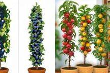 Cultivar árboles frutales