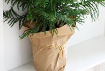 Plants||indoor