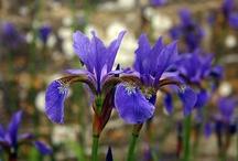 purple / by Lisa Tottingham