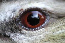 Bird eyes