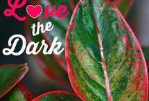 plants that love the dark