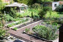 Veggie and Flower Gardens / by Rachelle Hose