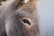 Donkeys <3