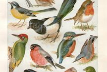 πουλιά σε χαρτί