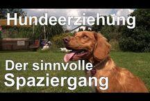 Hundererziehung