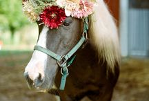 Animals At Weddings. / Ideas to involved your beloved pets at your wedding.