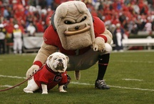 Its Great to Be a Georgia Bulldog! / I said its great to be a Georgia Bulldawg!  For all things dedicated to those who bleed red and black.  / by Harmony Gee