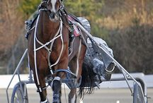 Harness racing / Harness  racing action. / by Vanessa
