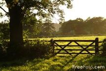 Fencing/Gates