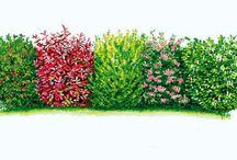 Jardinage N3